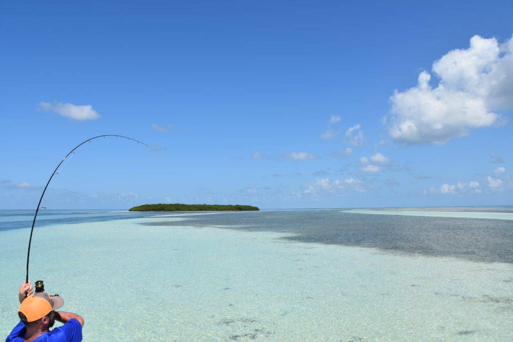 An angler is hooked up to a bonefish with a spinning rod on a clear shallow flat in the Florida keys with the sunshine bright over the sandy shallows and a single green mangrove island in the background