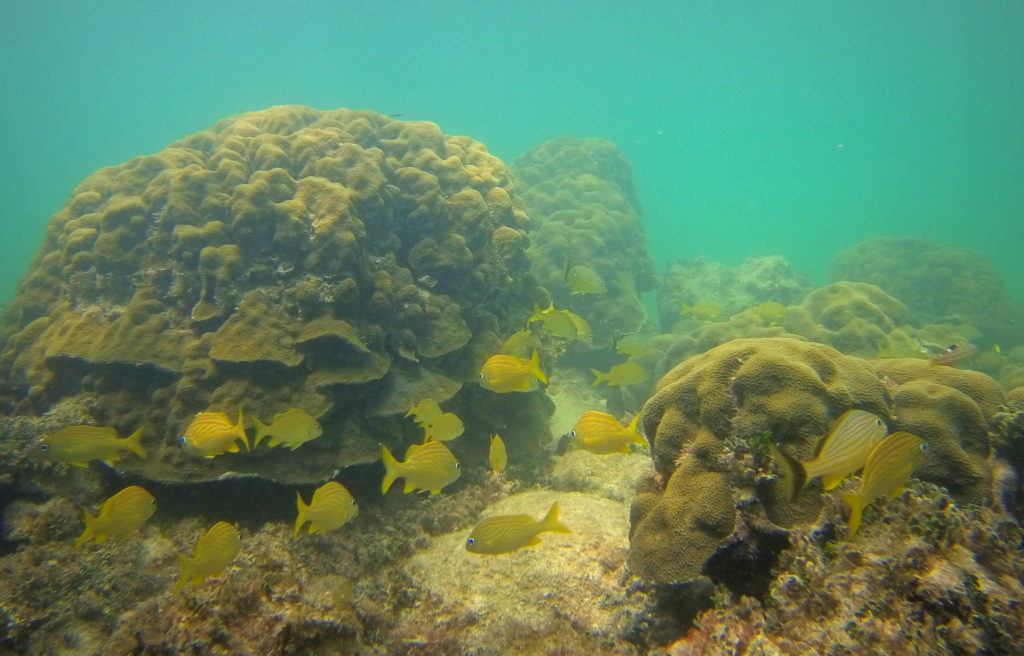 Coral formations off of key west offer great snorkeling and are home to an abundance of fish species.