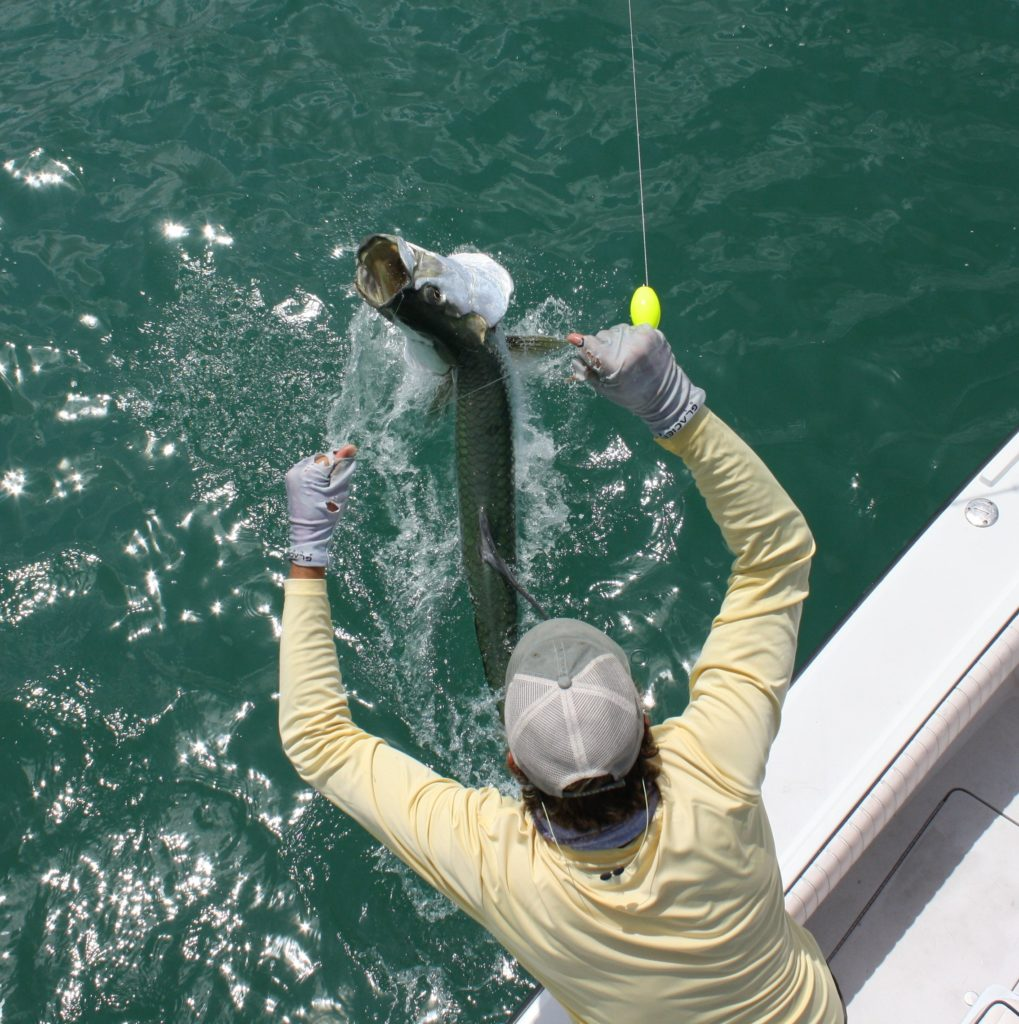 captain nick labadie is seen landing a big tarpon next to the boat as it jumps out of the water trying to get away one last time