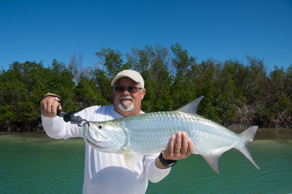 An angler is holding up a juvenile tarpon caught next to a mangrove island in the lower Florida keys.