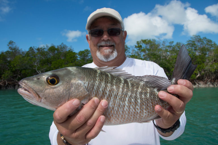 An angler is holding a mangrove snapper he caught in the backcountry off of key west.