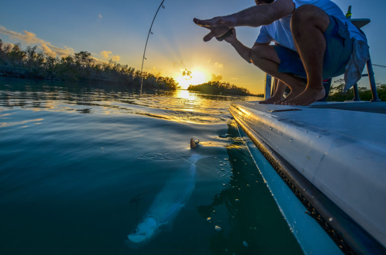 Nick LaBadie lands a juvenile tarpon as the sun sets around some mangrove islands in the Florida Keys.