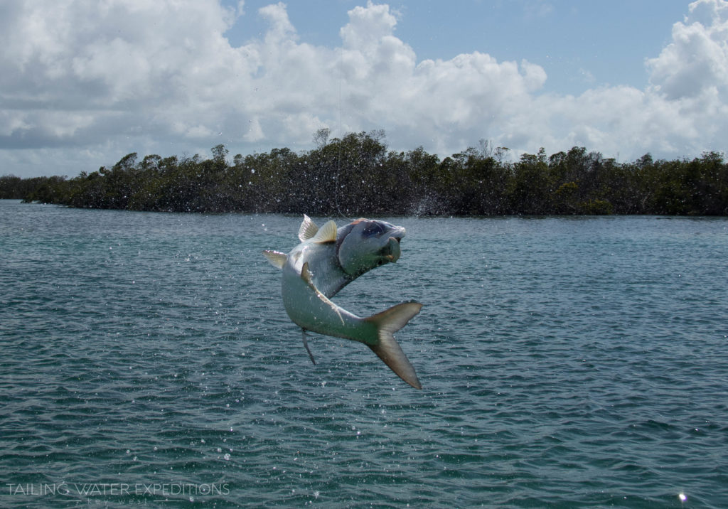 Get some air! Florida is a great place to come and get hooked up to the silver king.