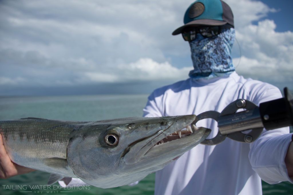 Check out the teeth on this one. The Great Barracuda have a mouth full of razor sharp teeth!