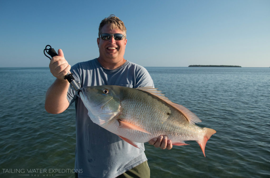 What a beast of a mutton snapper caught in the shallows off of Key West!